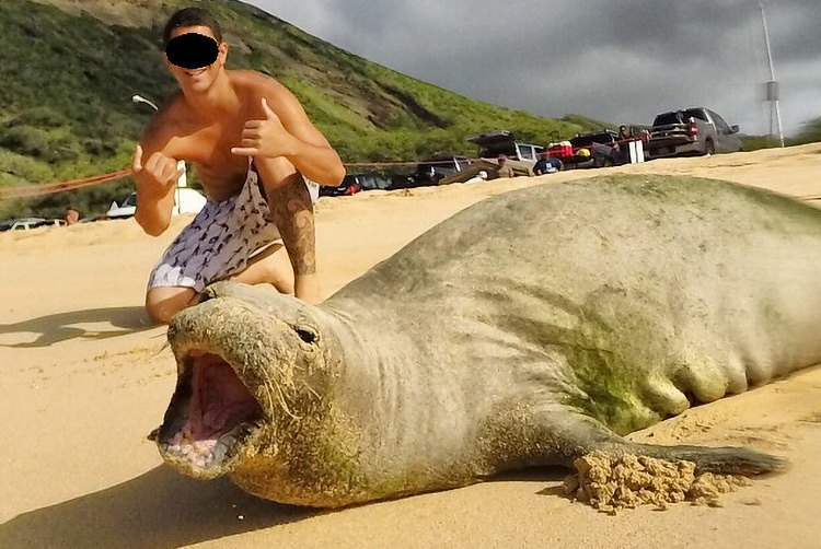 Person kneeling close to monk seal on beach.