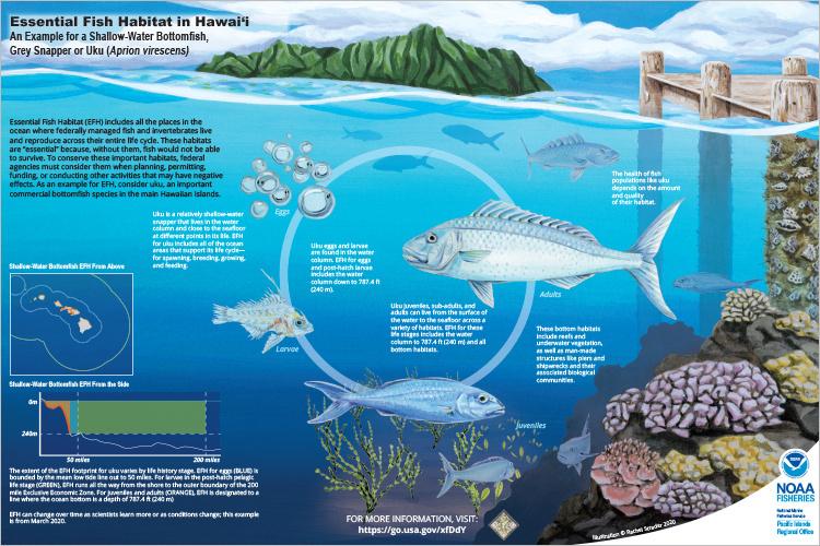 Scientific illustration of essential fish habitat.