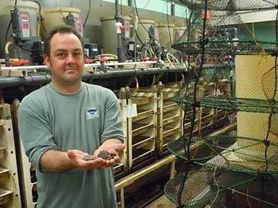 Worker in lab holding oysters in front of racks