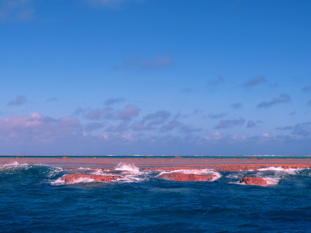 The reef at Rose Atoll is covered in crustose coralline algae—a calcifying algae that can be pink and purple. The oceanographic conditions here are just right for this algae to build its calcium skeleton and thrive. It can even survive after being exposed during low tide. (Photo: NOAA Fisheries/Samantha Clements)