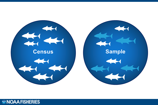 A diagram depicting the difference between a census survey and a sample survey.