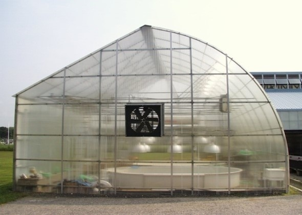 Exterior view of greenhouse