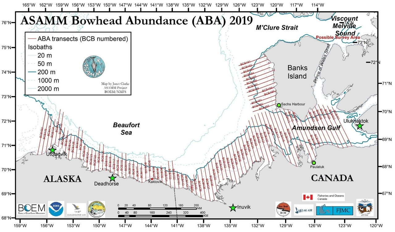 ASAMM Bowhead Abundance 2019 study area and transect lines in the Beaufort Sea and Amundsen Gulf. These transects will be surveyed in August.