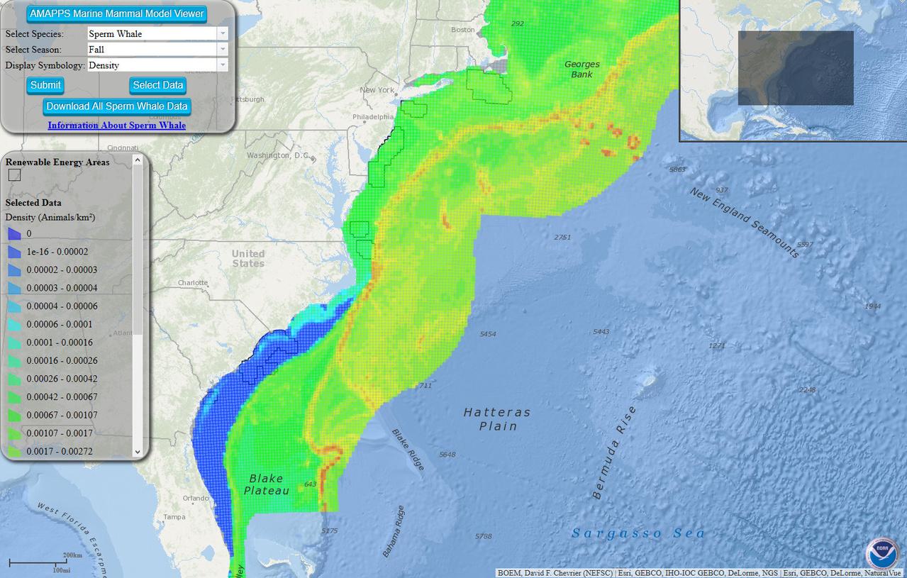 screenshot of the marine mammal model viewer