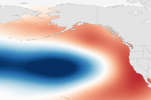 Illustration of the Pacific Decadal Oscillation (PDO) warm phase pattern. Image adapted by NOAA Climate.gov from original by Matt Newman based on NOAA ERSSTv4 data.