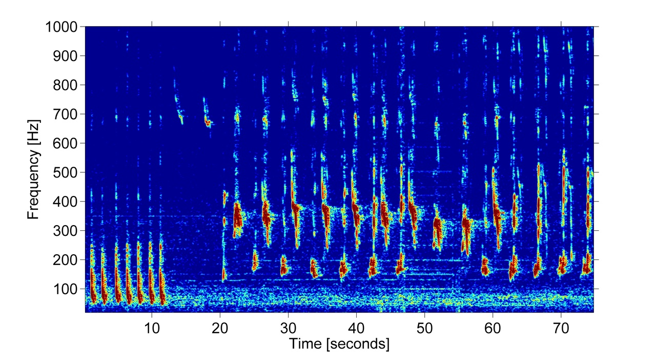 A spectrogram of humpback whale song