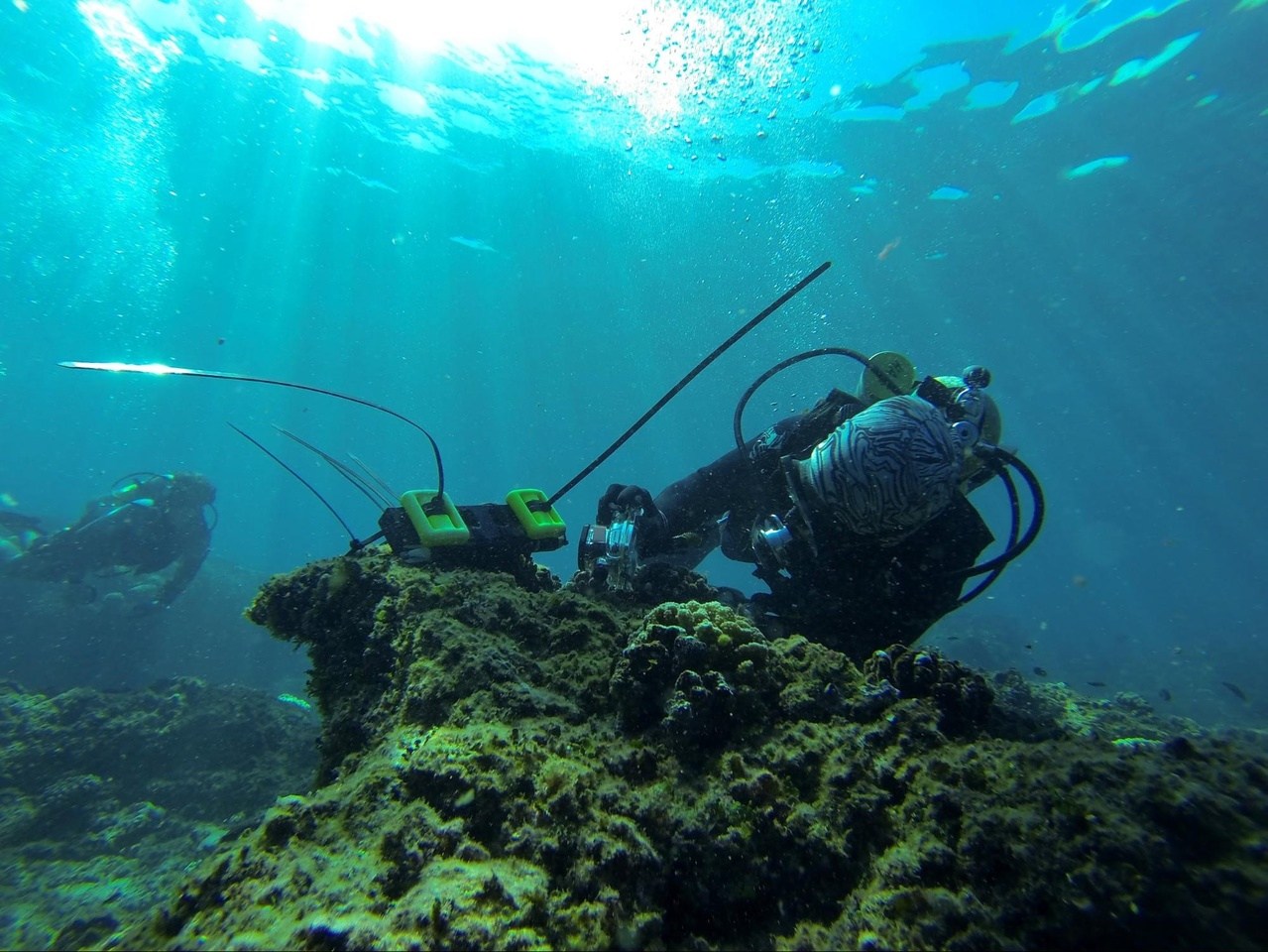 Photo of scuba diver working on reef.