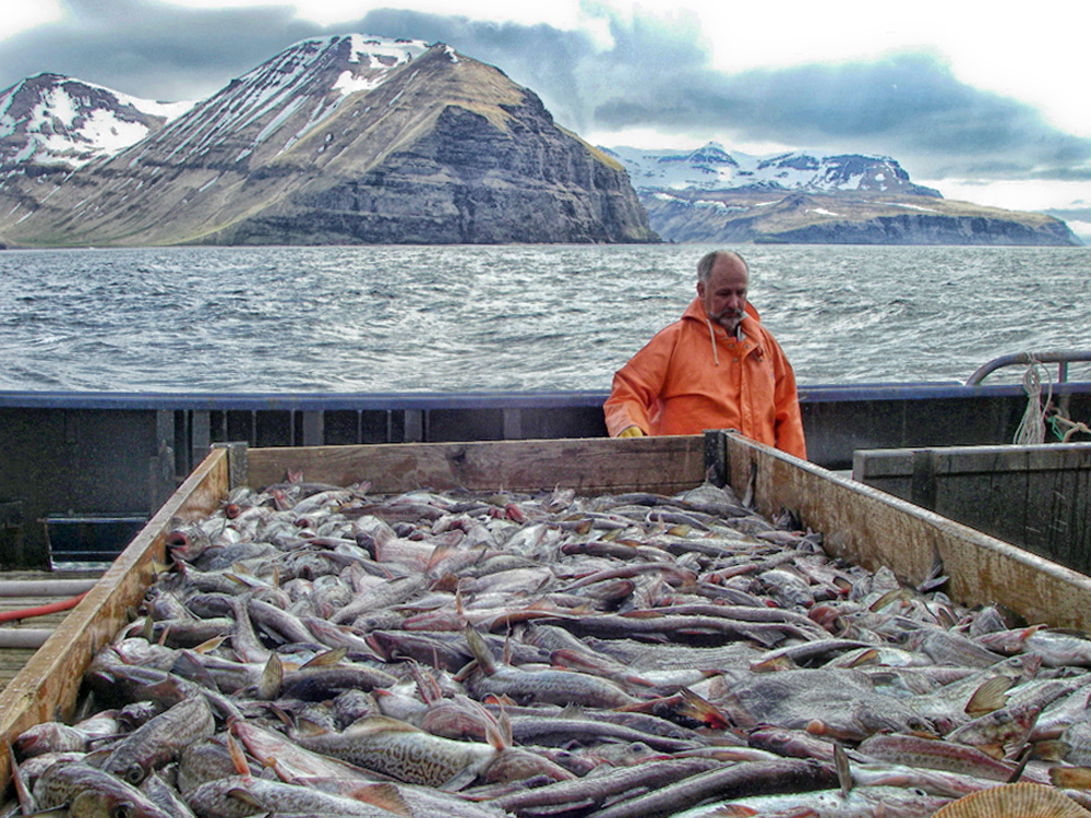 Preparations are made for sorting a catch of assorted groundfish.
