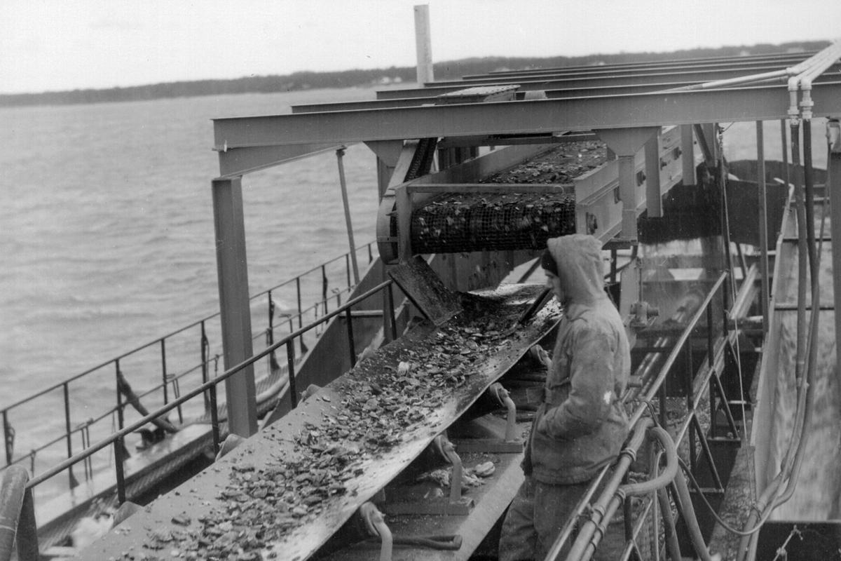 Man processing fish on conveyor belt