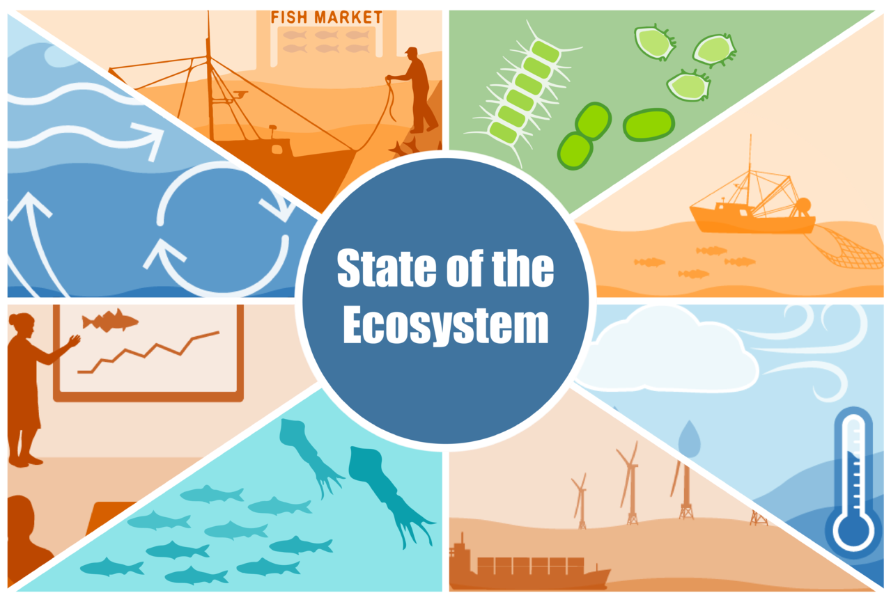 Infographic representing the fishing industry, primary production, fishing, climate, wind farms, fish, advice and currents.