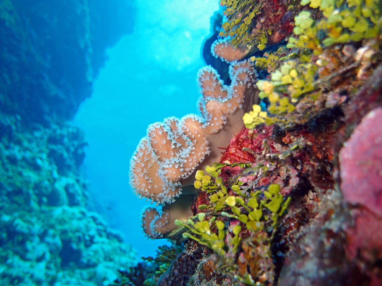 Soft corals at Aguijan Island