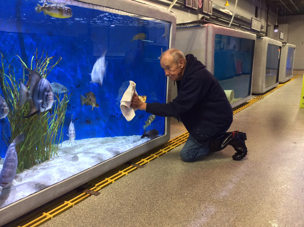 Elderly volunteer washes aquarium tanks.