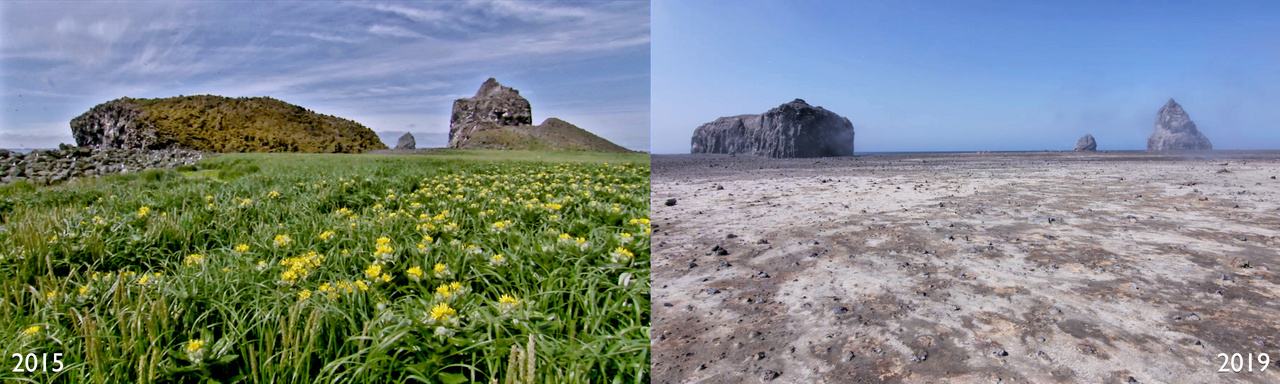 Bogoslof - before and after.jpg
