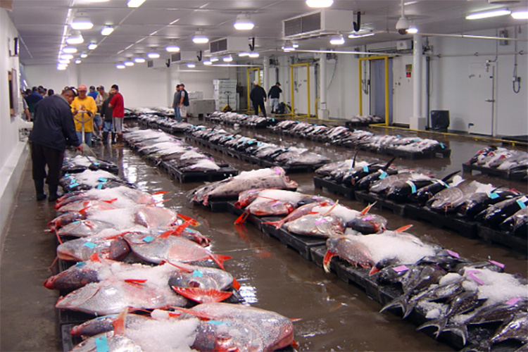 Fish auction with opah in foreground.