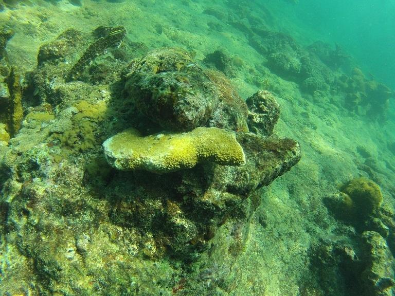 coral photo 3.jpg