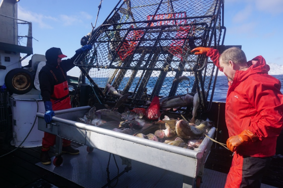 The crew of the F/V Deliverance help hand-select Pacific cod for tagging.
