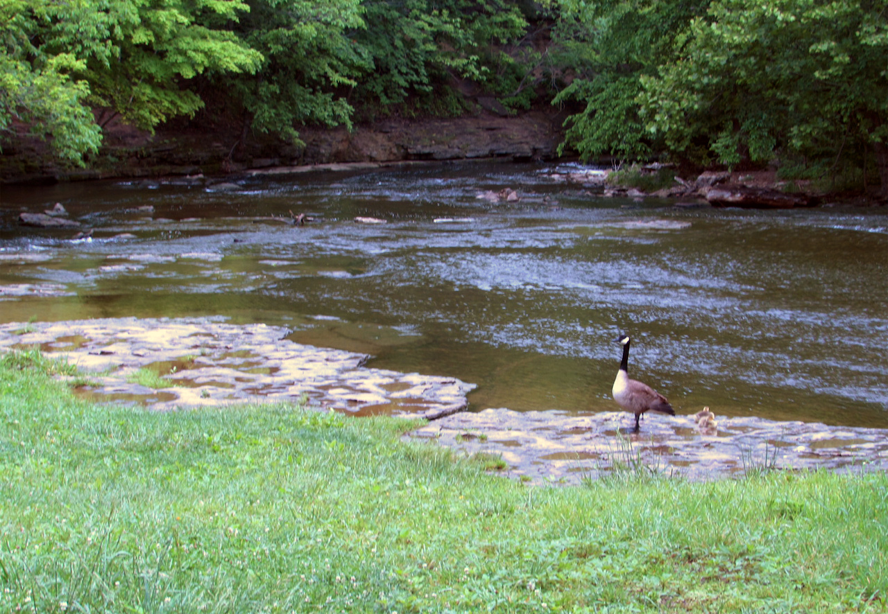 SB-Louisville-Parks-Cherokee Park-Big Rock with goose .jpg