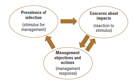 Graphic showing relationship between prevalence of infection, concerns about impacts, and management objectives and actions.