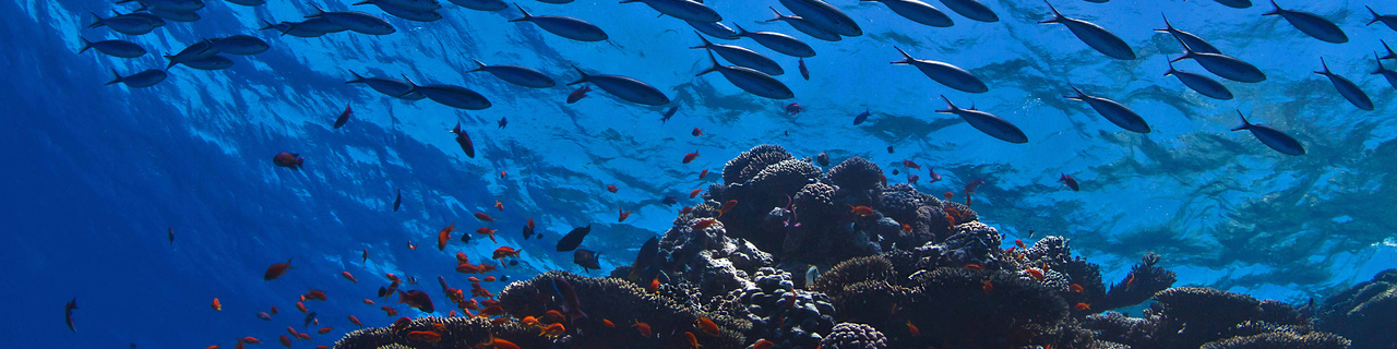 NOAA RecFish Banner-reef-crop.jpg