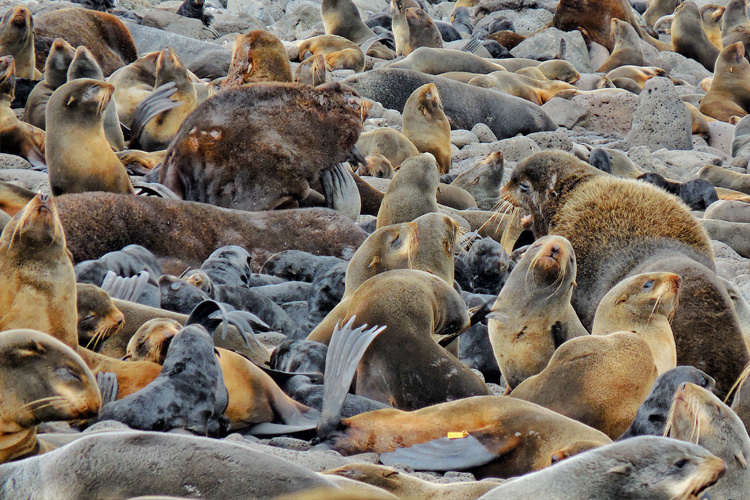 Understanding Northern Fur Seal Relationship to Prey