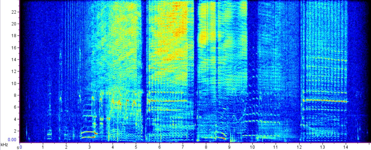 Beluga whale call Spectrogram image.