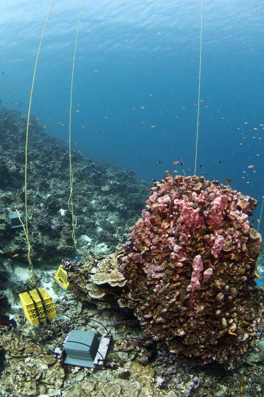 After we soak them in ocean for 3 years, we ready the autonomous reef monitoring structures (ARMS) in yellow crates for pick-up. (Photo: NOAA Fisheries/Jeff Milisen)