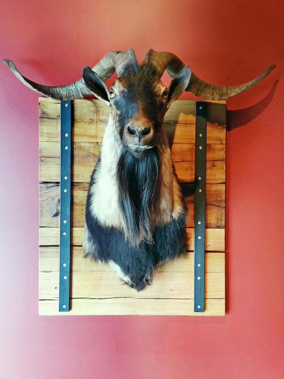 A mounted goat watches over the diners at wooden goat.
