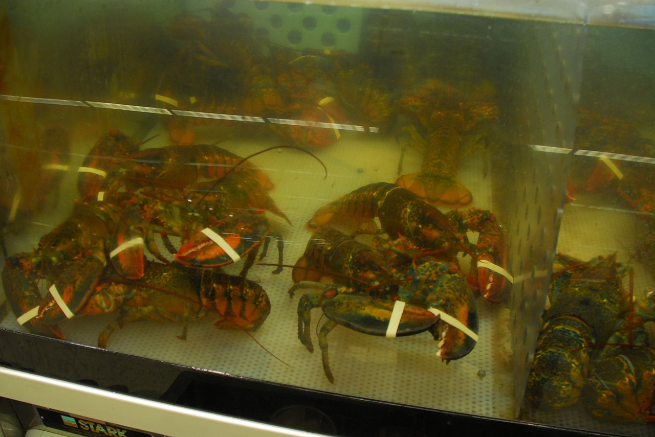 lobsters-for-sale.jpg