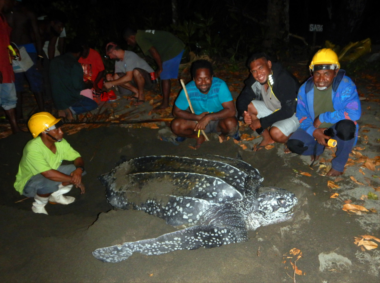 Nighttime photo of team surrounding leatherback turtle laying a nest.