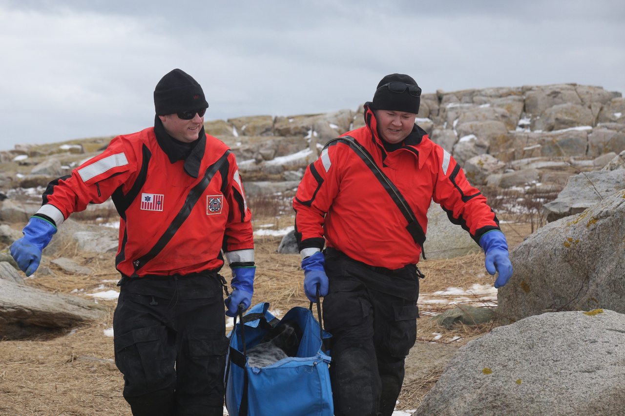two men from Maine marine patrol carry a seal pup in a open bag