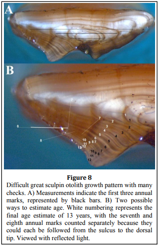 Age and Growth Information, the great sculpin