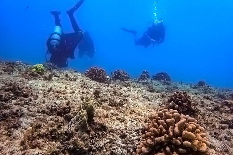 Scientists diving and searching for location for a new coral nursery