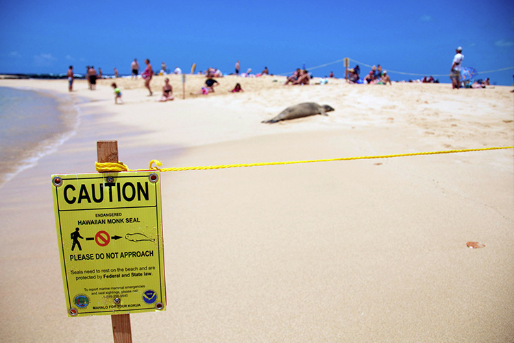 Monk seal caution beach sign with a monk seal and humans in the background.