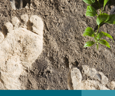 Photograph of two footprints in the dirt with a wild plant in the corner