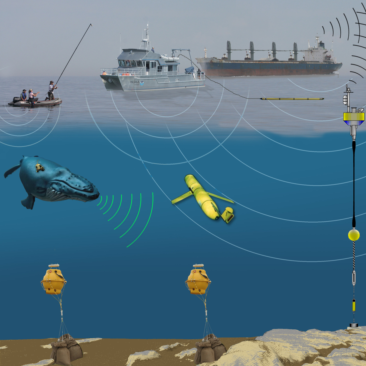 Graphic displaying various technologies used to study marine mammal acoustics.