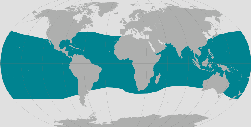 Brydes whale range map