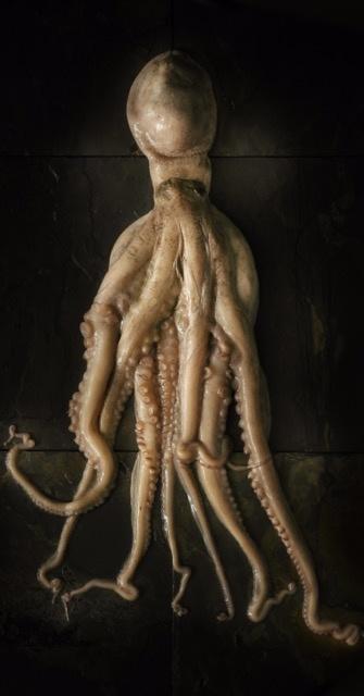 Octopus photograph by Ben Fink