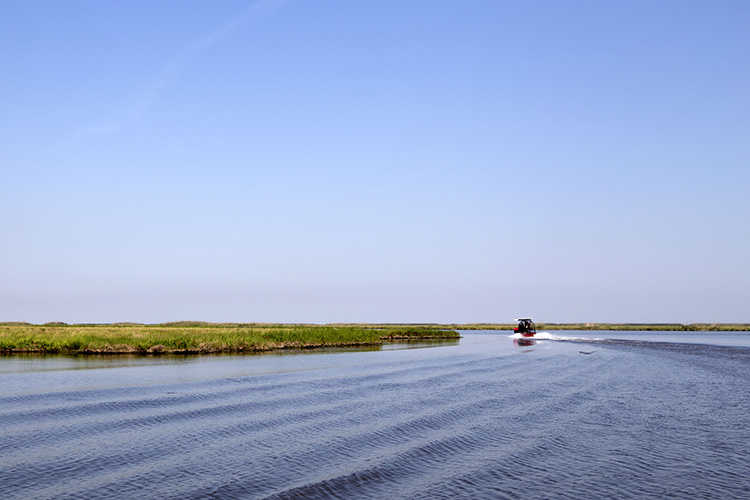 An airboat cruises on the water amid wetland plants