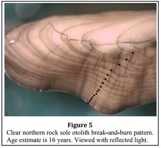 Age & Growth Northern rock sole Otolith image