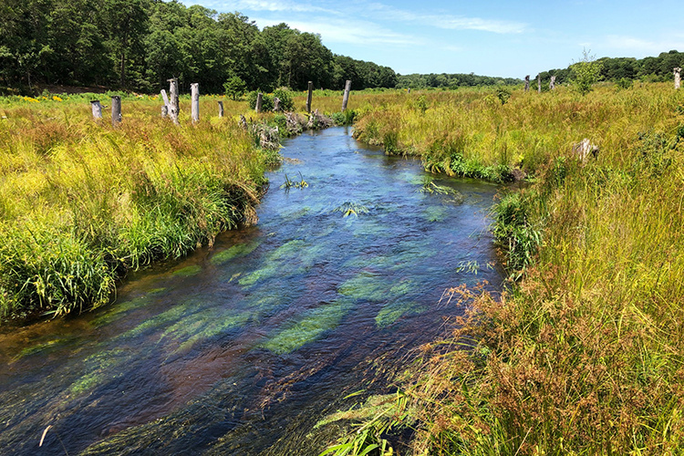 Coonamessett River and Wetland Restoration in Falmouth, Massachusetts.