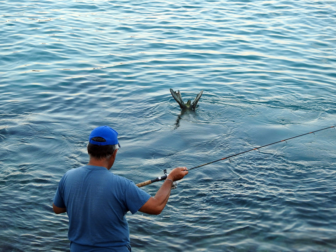 A fisherman demonstrates responsible fishing by keeping his line up until the seal swims away