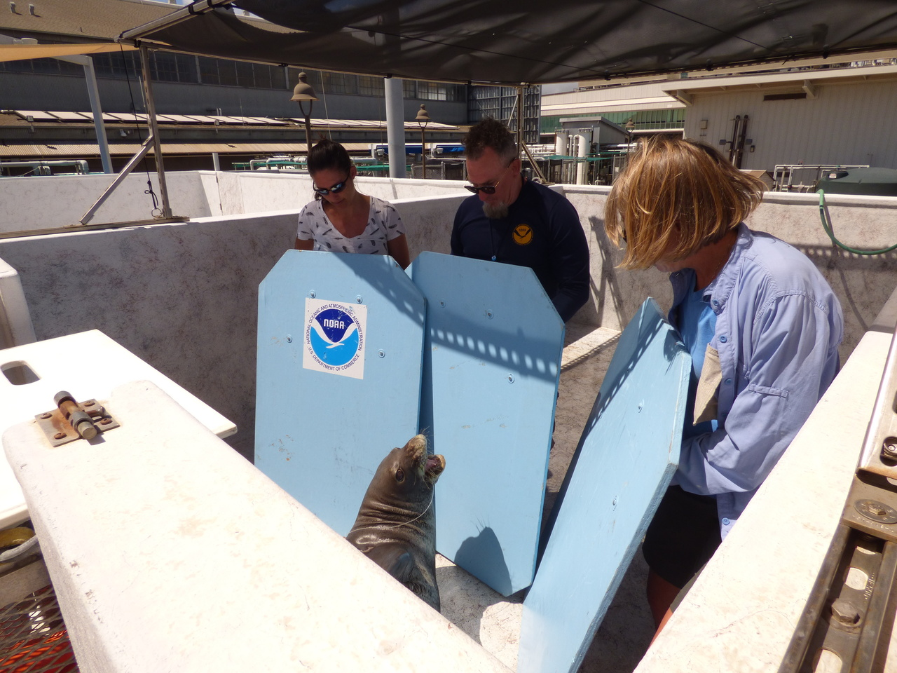 Monk seal response team