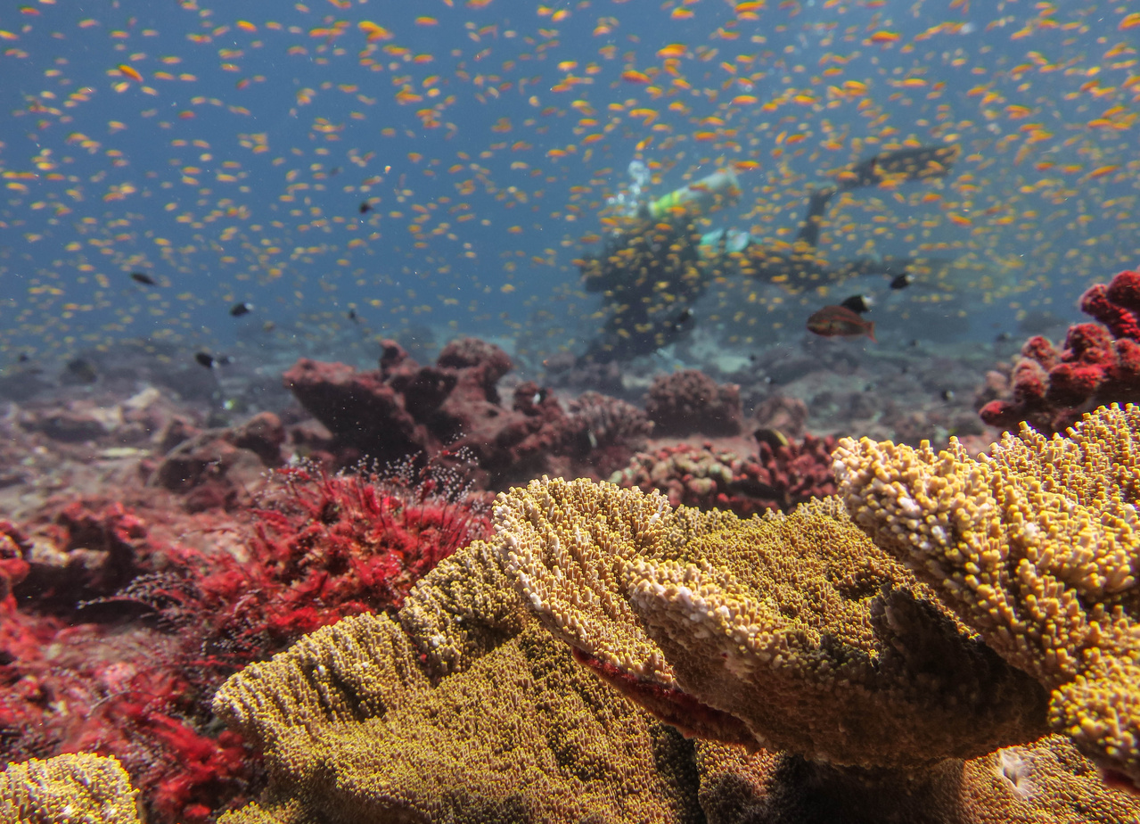 Diver conducts a survey to assess reef condition after coral bleaching at Jarvis Island.