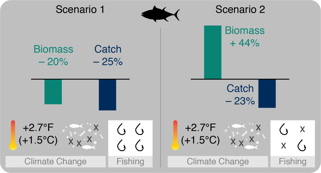 Two fishing scenarios projecting biomass and catch with a 2.7 degree Farenheit increase in ocean temperature.