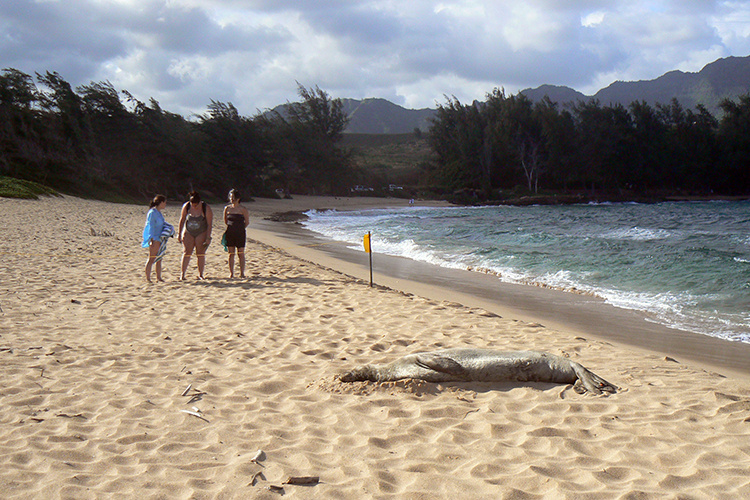 Three observers watching a monk seal from a distance on the beach.