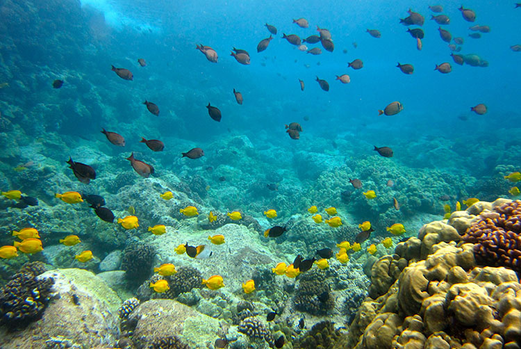 Fish swim over healthy, colorful reef.