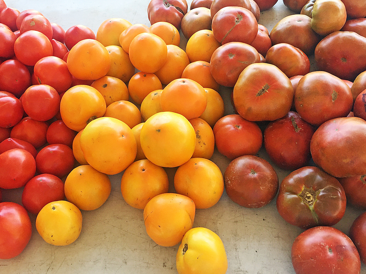 Gorgeous Ripley tomatoes from Ripley Produce, $2.49/lb.