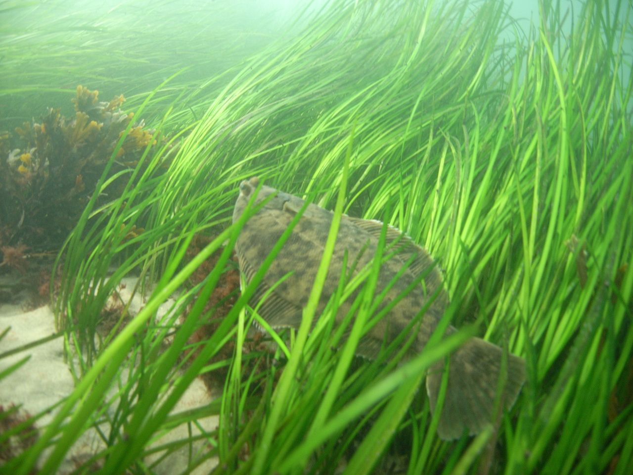 Sea grass with fish