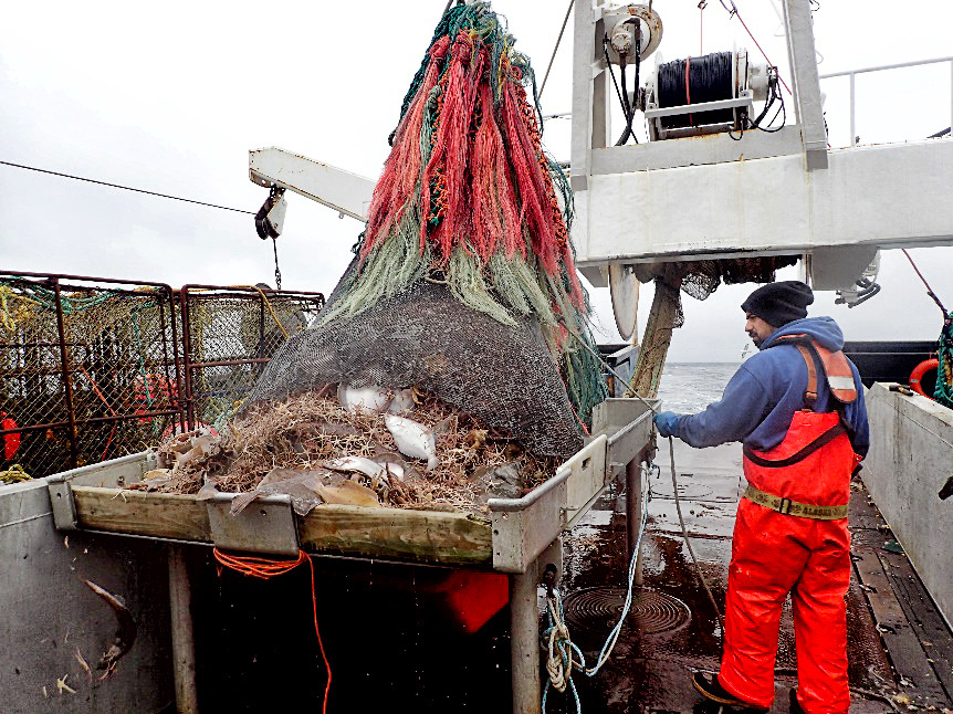 John Do Mar releases the catch from the trawl net.