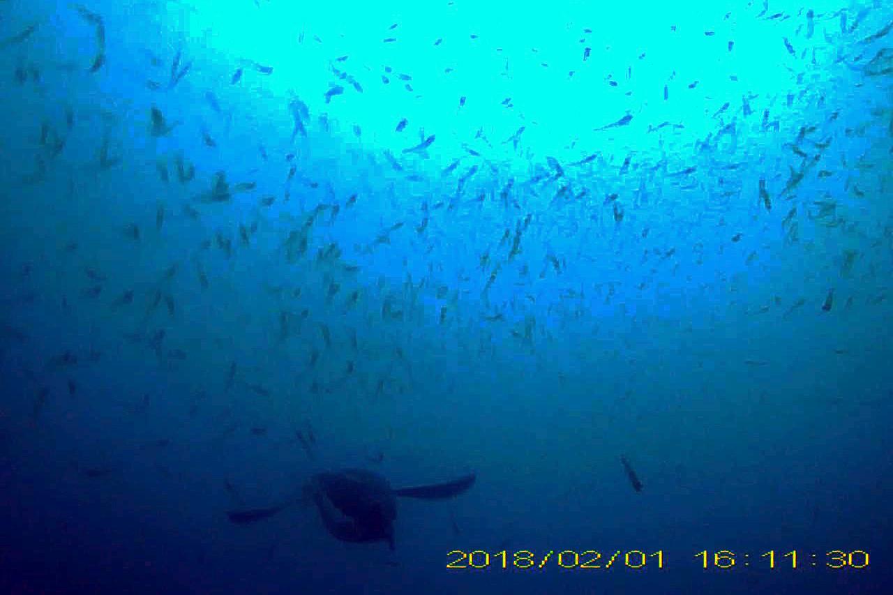 Watters_AERD_penguin in krill patch_2020_008590-edit (1).jpg